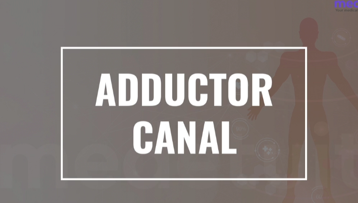 Contents of Adductor Canal