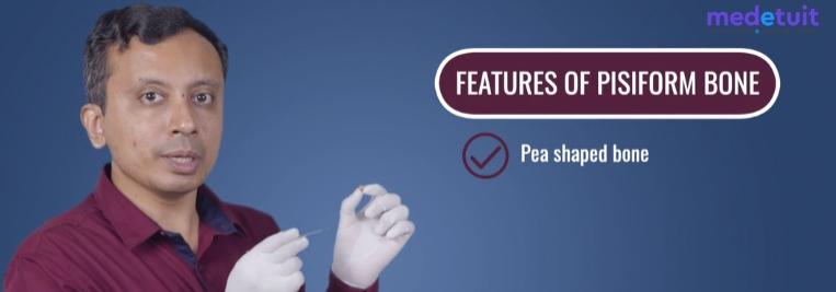 Features of Pisiform Bone
